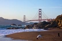 Dog Friendly Beaches In San Francisco - California