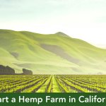 How To Start A Hemp Farm In California Part 1 California Cannabis Cpa