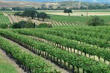 White Crane Winery