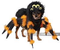SPIDER PUP DOG COSTUME - California Costumes