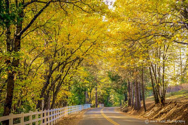 Central Park Fall Desktop Wallpaper California Fall Color 187 Apple Hill