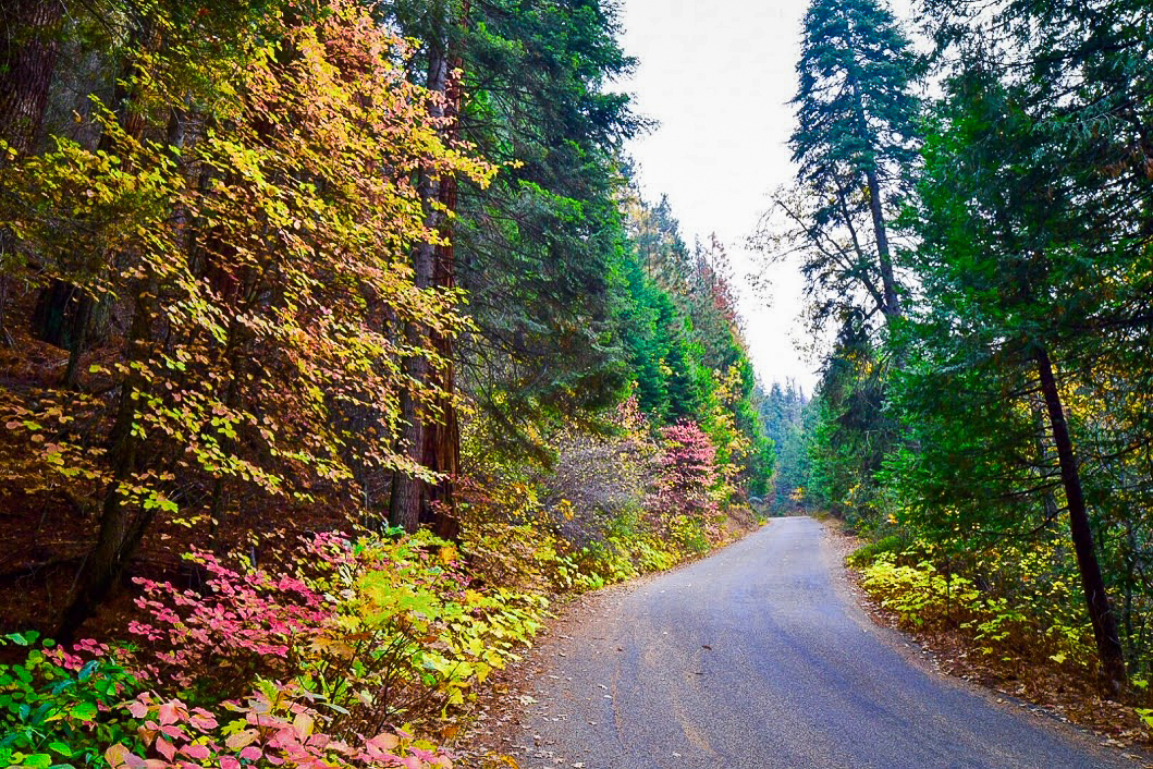 Free Fall Wallpaper Apps Sequoia National Park A Palette Of Color California