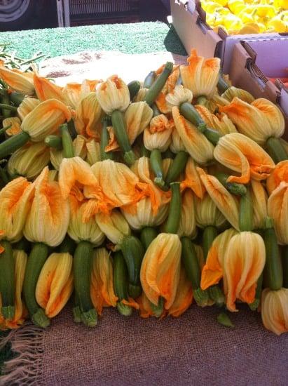 squash blossoms_01