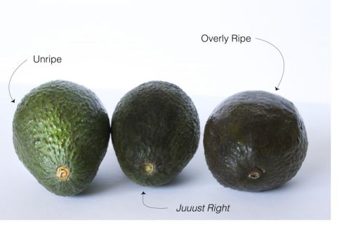 avocado ripeness