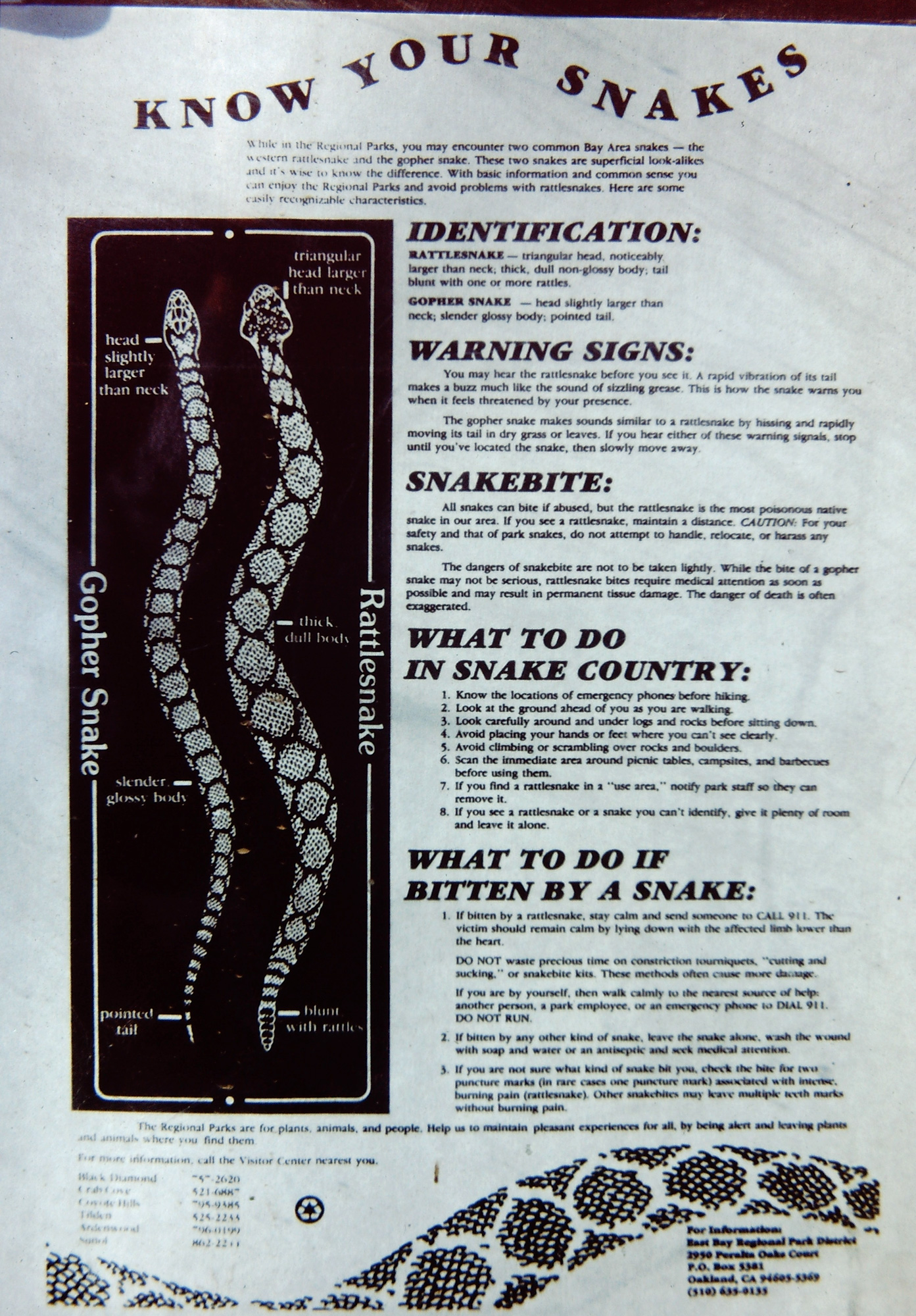 What Is The Difference Between A Kingsnake Vs A