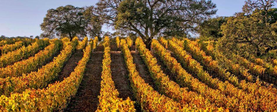 Olivet Road Vineyards