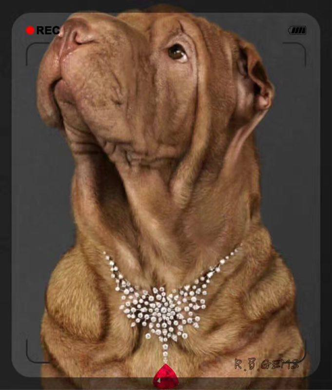 Dogs In Jewelry Jewelers Decorate Their Dogs Calla