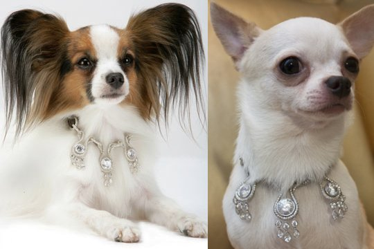diamond dog collars
