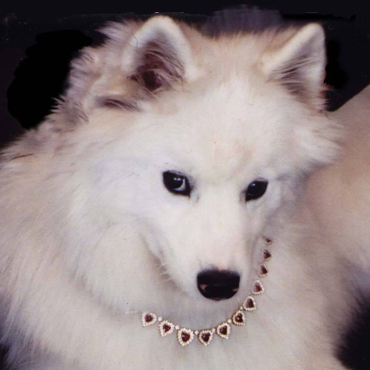 Dogs in jewelry