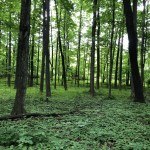 Taking You Inside the Sacred Grove in Palmyra New York