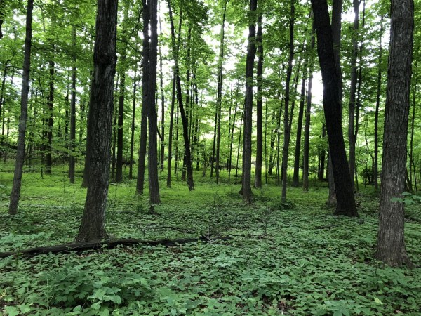 the sacred grove palmyra new york joseph smith first vision