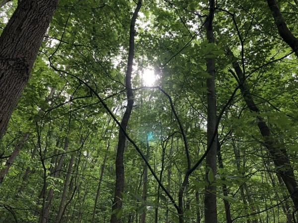 Sunlight in the Sacred Grove