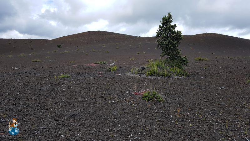 Camino de la devastación en Parque Nacional de los Volcanes