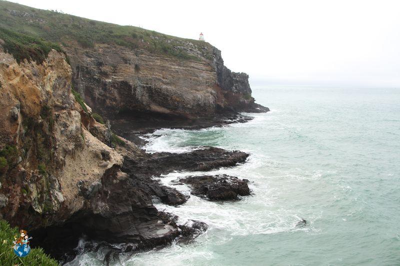 Recorriendo The Catlins y la Península de Otago