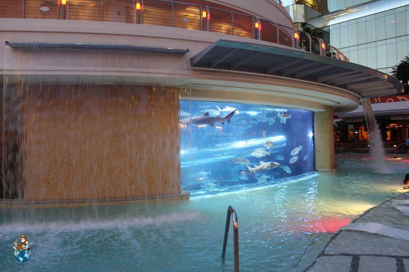 Piscina tiburones Hotel Golden Nugget