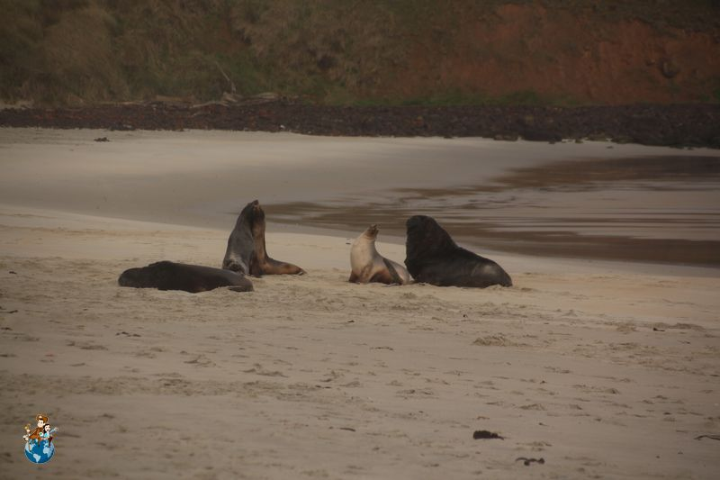 Animalitos en Playa Sandfly
