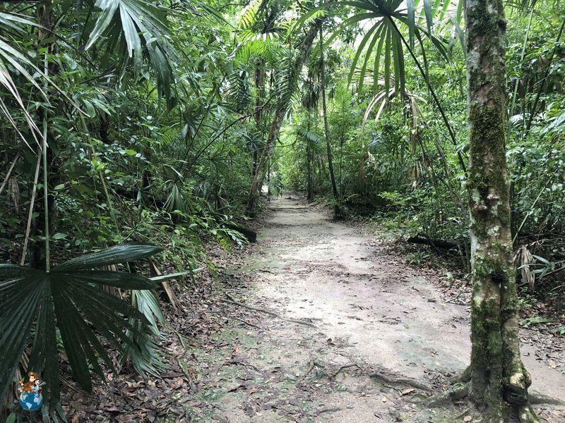 Senderos de Tikal