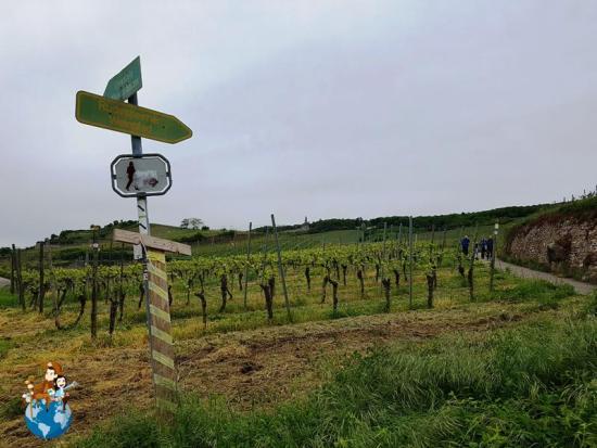 Senderos por los viñedos de Rüdesheim am Rhein
