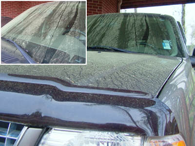 Yellow pine pollen covers everything in the Southeast during the early part of spring.