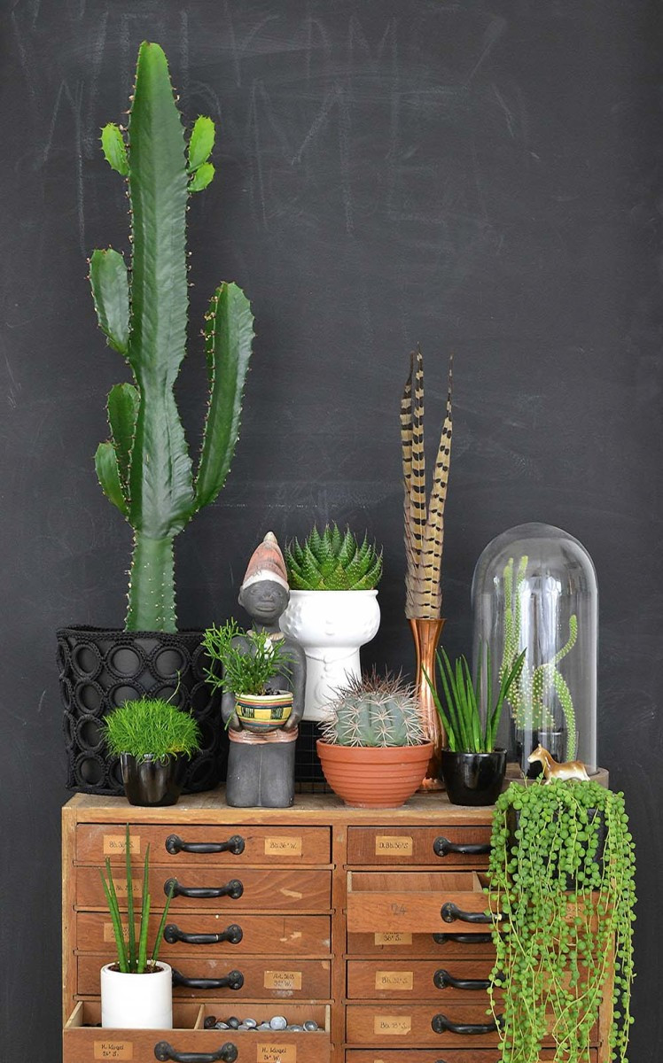 Urban Jungle  Interior  living and decorating with plants