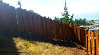 Redwood after before restoring   Cal Preserving