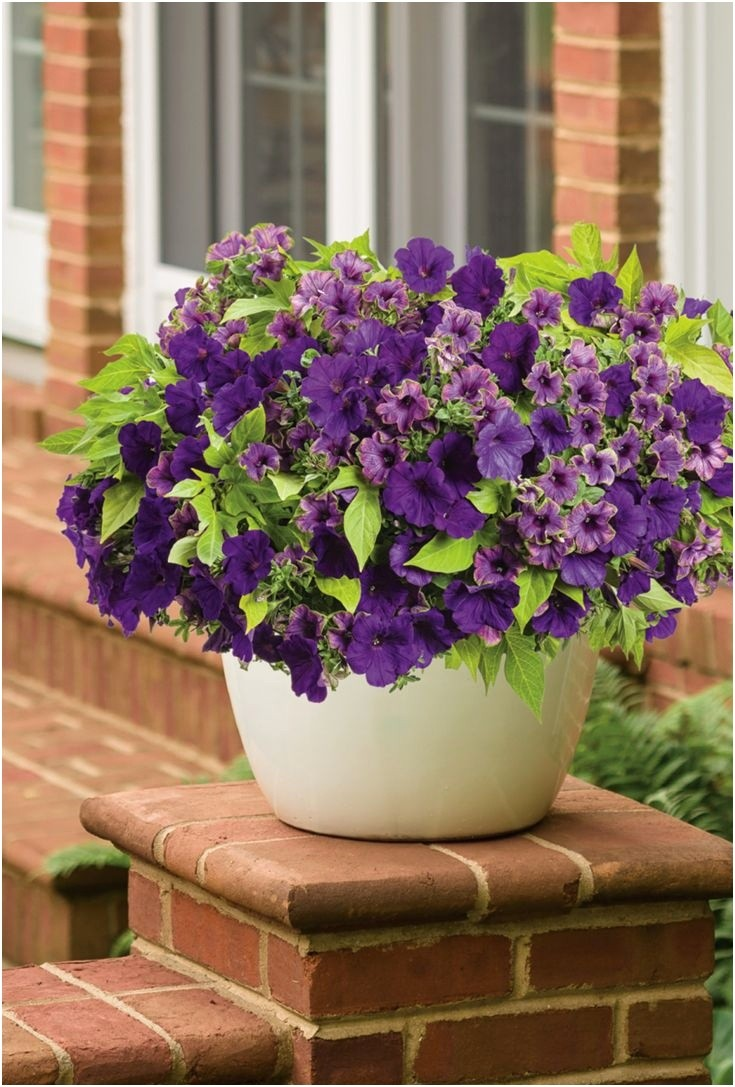 Container Gardens For Sun