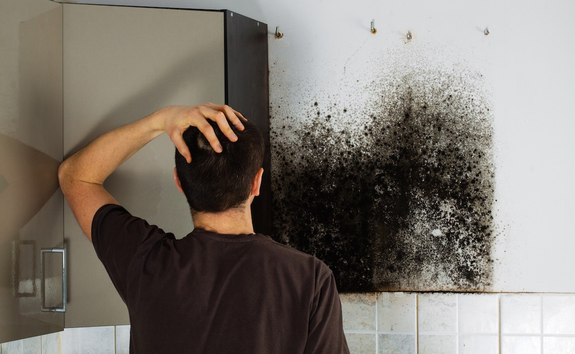 Removing Mold From Sheetrock