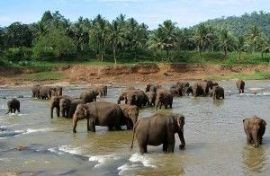 Elephant orphanage - wikipedia