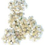 Huile essentielle d'Achillée Millefeuille – Achillea millefolium