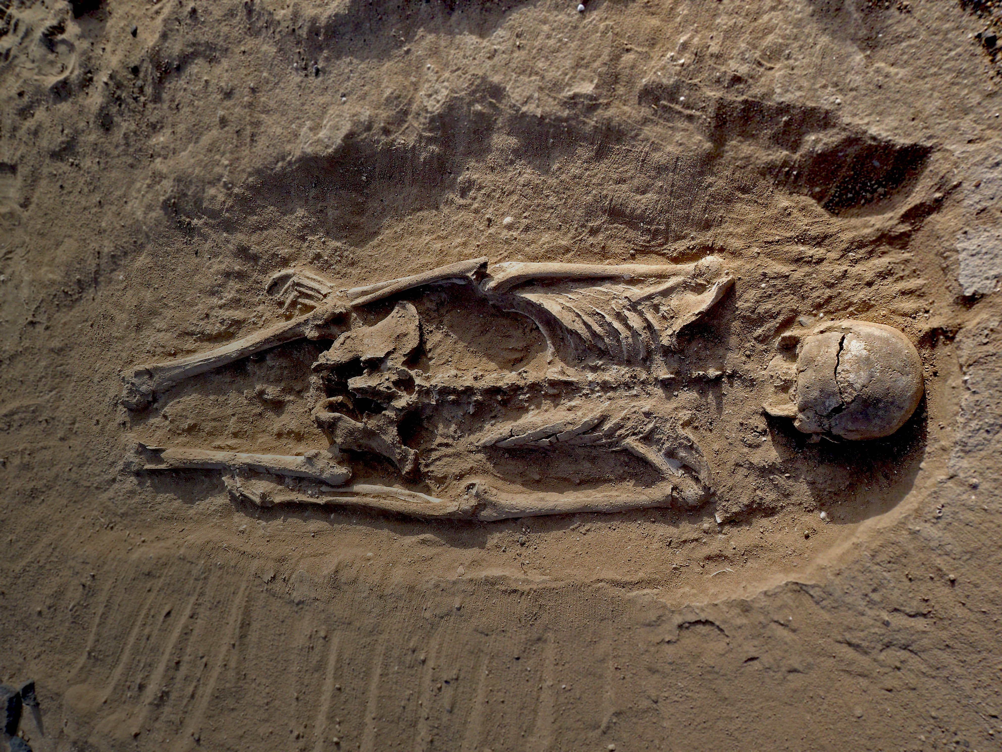 Evidence Of A Prehistoric Massacre Extends The History Of Warfare