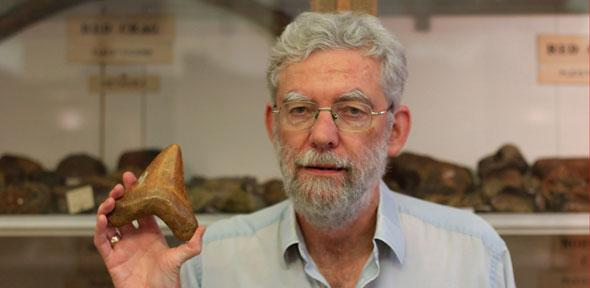 Sedgwick Museum Director Ken McNamara holding a giant tooth from the Carcharocles megalodon – a 20 metre-long shark thought to have evolved from the genus named after Dr McNamara - See more at: http://www.cam.ac.uk/research/news/ancient-ancestor-of-great-white-shark-named-after-museum-director