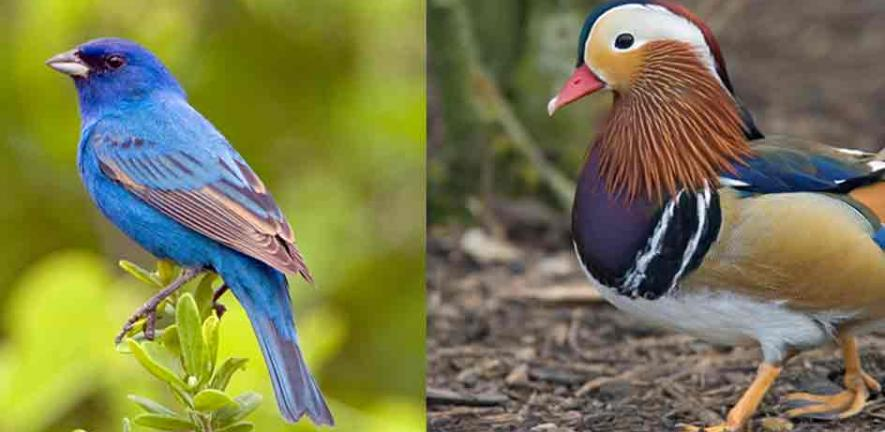 Birds of a feather display only a fraction of possible colours | University of Cambridge
