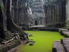 Stunning Photograph of Ta Prohm Temple