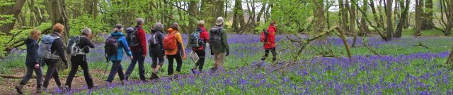 26 Apr 2015 Bluebell walk