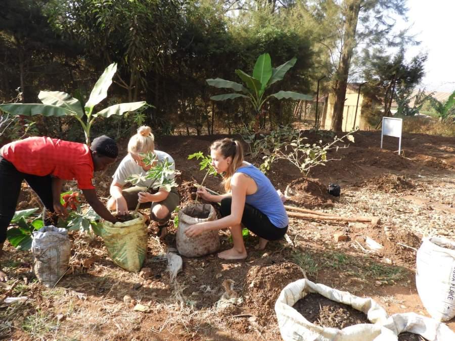 Planting Papayas