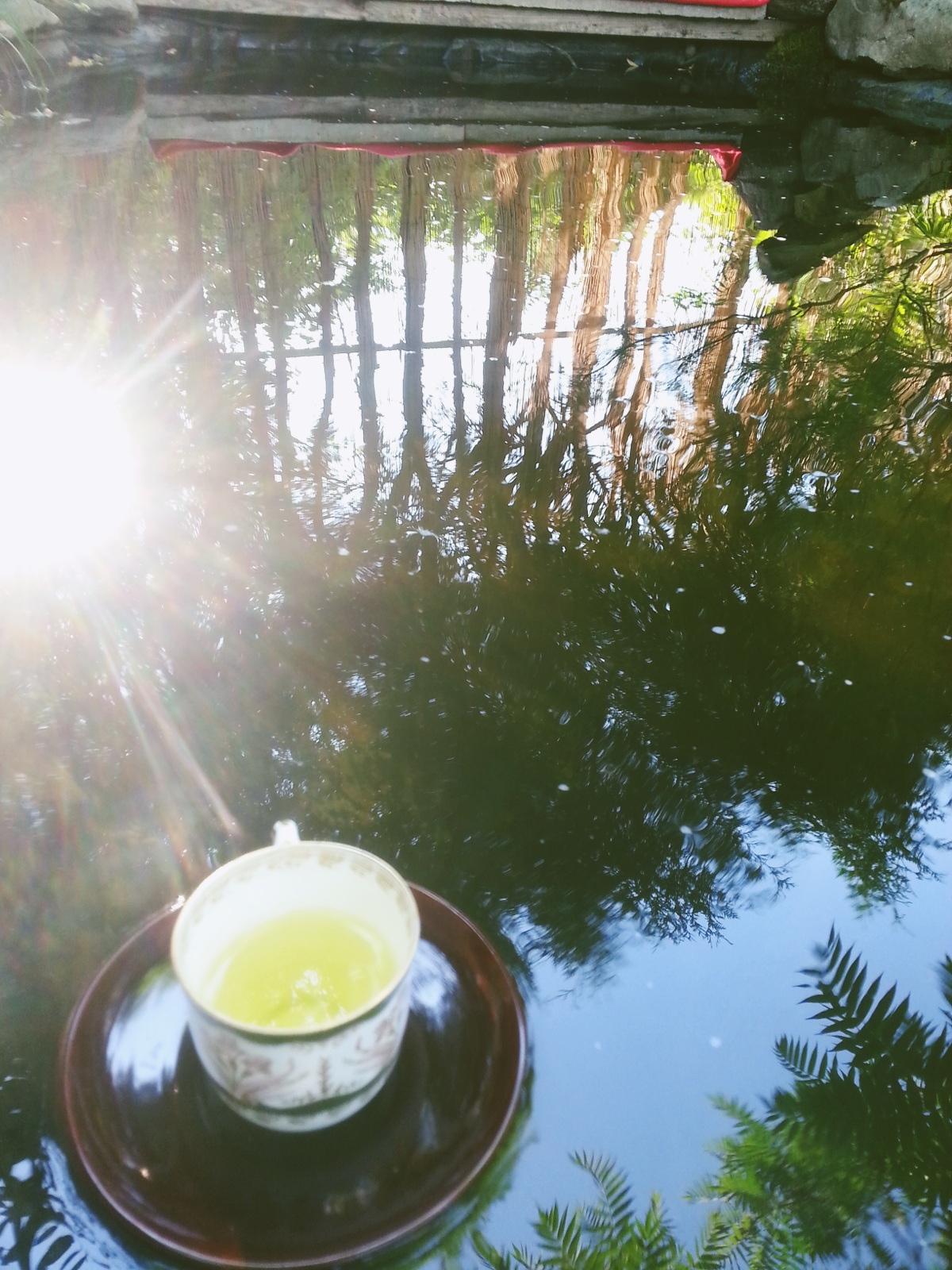Floating teacups in afternoon light