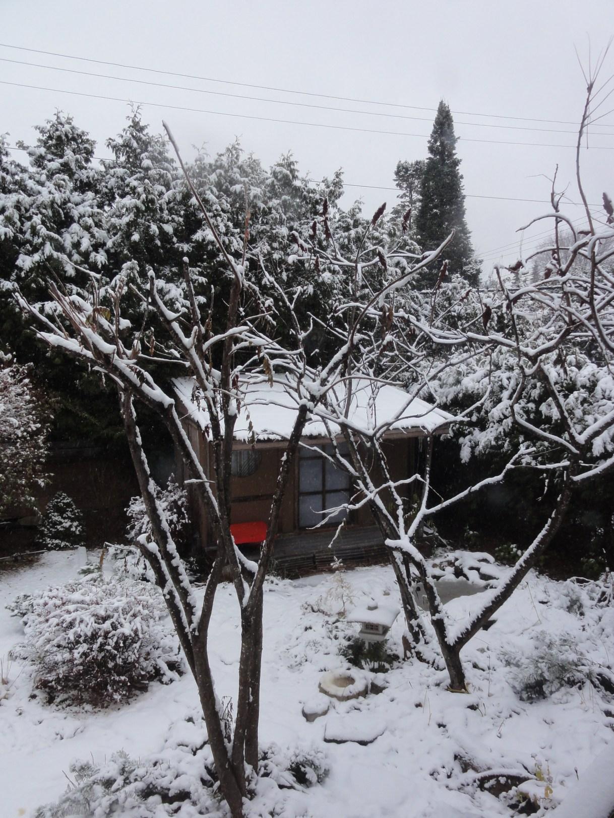 Tsubakian in winter