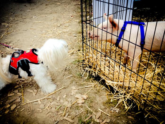 Ella and pig