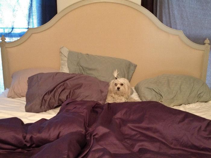 Ella in Bed