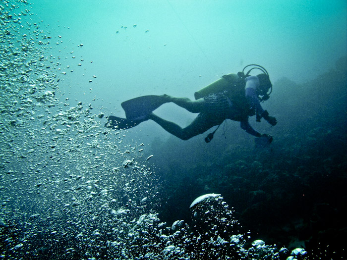 Diving Dominica