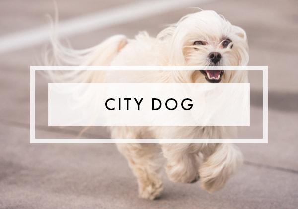 Posts on City Dog