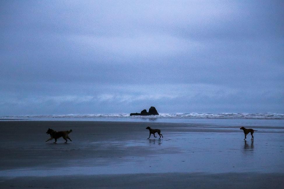 Copalis Beach, Washington | A Coastal Road Trip from Seattle