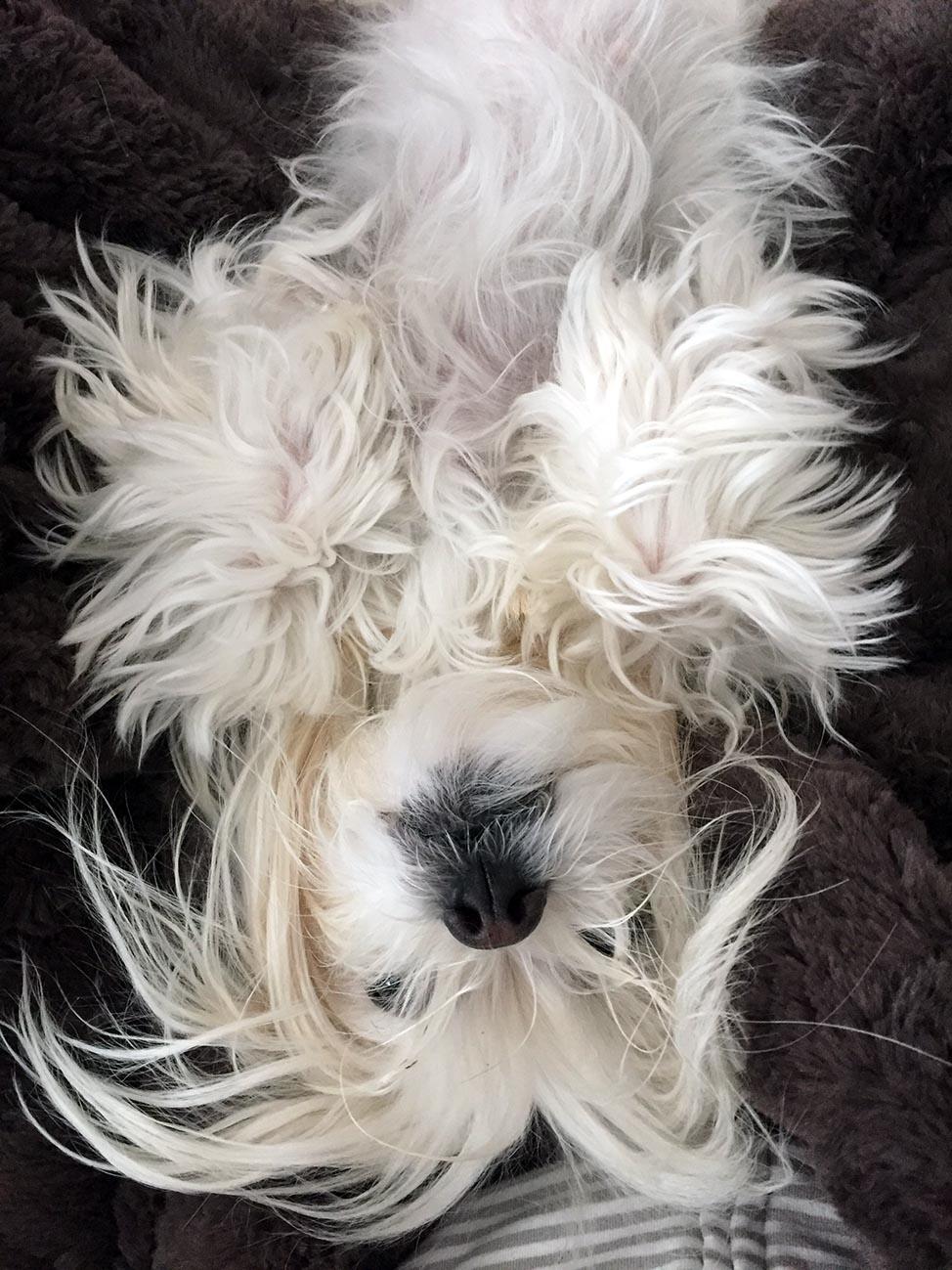 Ella the Dog blogs