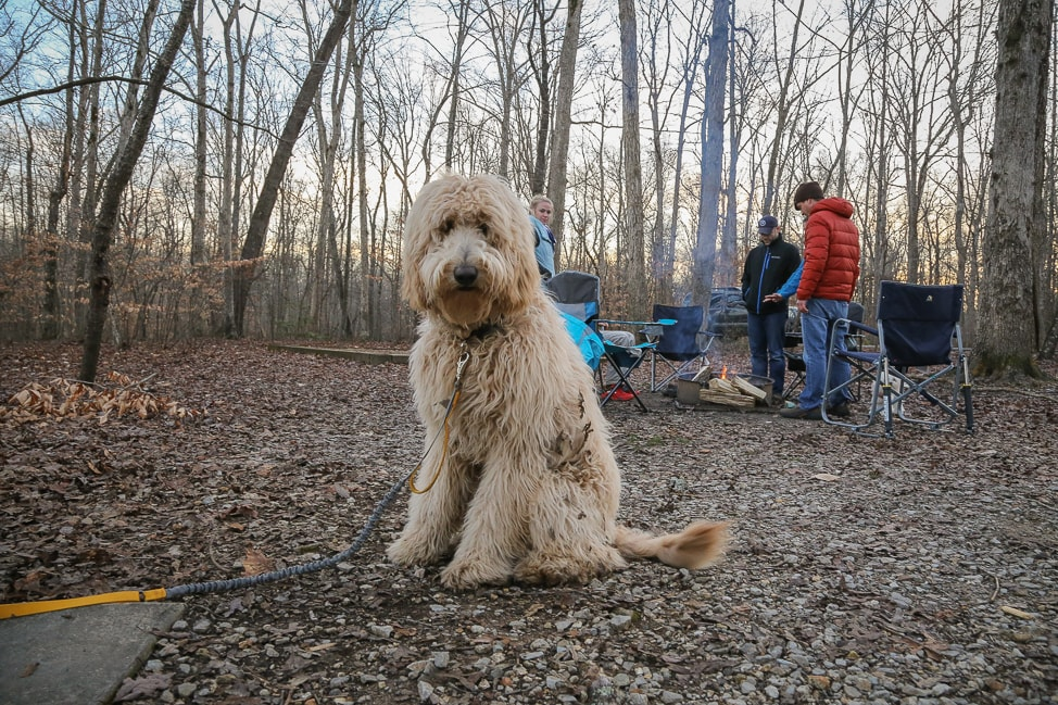 Hiking with Dogs in Tennessee