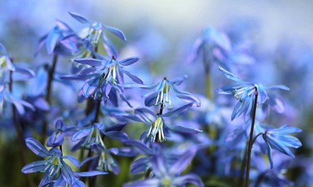 11 quick spring photography tips