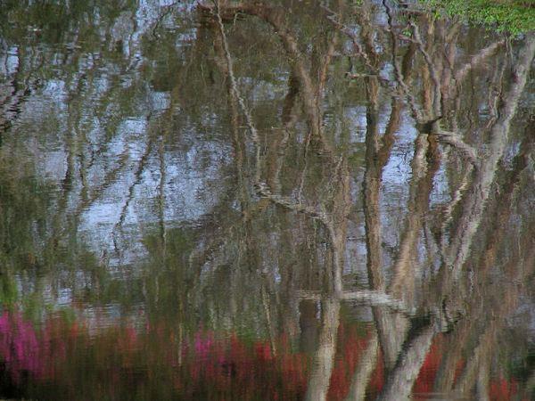 trees and garden in pond reflection, bellingrath, alabama, by lorelle vanfossen