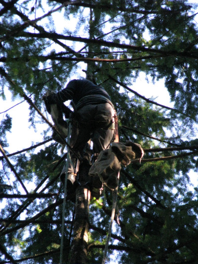 DJ in tree as tree climber grabs him - by Lorelle VanFossen
