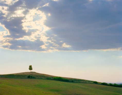 Lone Tree, Pienza, Toscana, 2004 - photograph by Jeff Curto