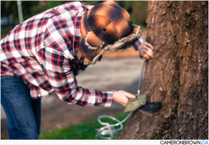 How to tap a maple tree-5