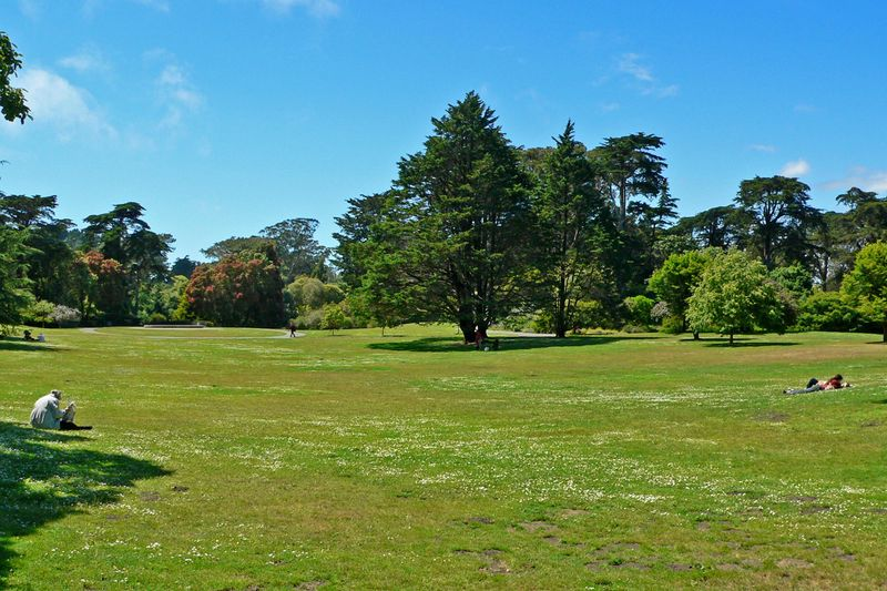 800px-San_Francisco_Botanical_Garden_Great_Lawn_1